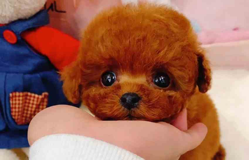 Site Seling Realistic Teddy Dog Lucky complaints. Realistic Teddy Dog Lucky fake or real? Realistic Teddy Dog Lucky legit or fraud?