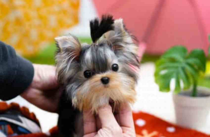Complaints for Lifelike Animal Realistic Kitty and Realistic Dog like Realistic Yorkie Dog Casey, Realistic Teddy Dog, Realistic Bunny, etc. Fake or Real? Legit or Fraud?